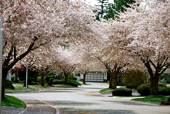 "My Dream Street I Call ""Blossom Bay"" by Carol Clifford"