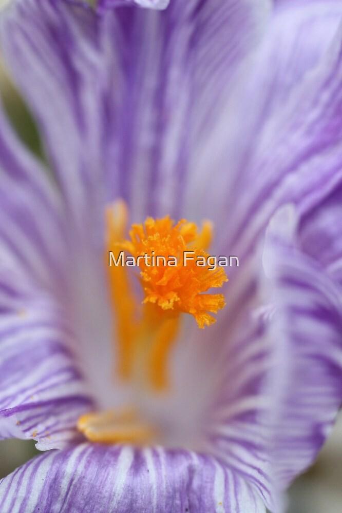 Crocus Close up #2 by Martina Fagan