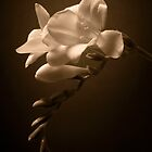 Freesias by clckac