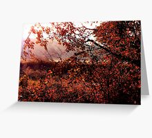 Into The Autumn Sun Greeting Card