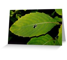 Feather Cradled on Leaf Greeting Card