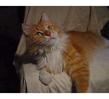 Content Maine Coon Cat Photographic Print