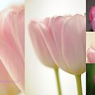 Tulips Symphonie by Rosy Kueng Photography