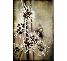 Spring is sprung Photographic Print