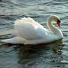 Blue-Eyed Swan by Christina Spiegeland