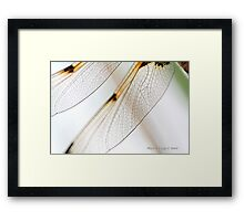 Four-spotted Chaser wings, Libellula quadrimaculata Framed Print