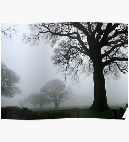 Trees in the Mist Poster