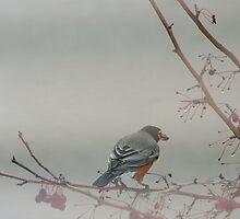 Foggy Mornin' Robin by Linda Busby