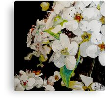 Peartree Blossoms Canvas Print