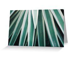 Genus of Love - Aloe Vera type plant Greeting Card