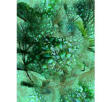 Fractal Forest Photographic Print