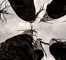 Burned Trees at Royal Gorge Park by DeeCarmack