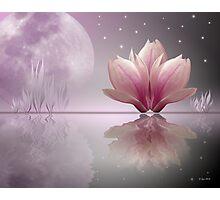 Magnolia Dreams Photographic Print