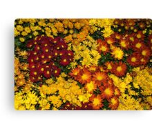 Abundance of Yellows, Reds and Oranges Canvas Print