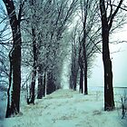 Winter Trees by John Laubach