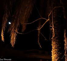 Peeping Tom by Varun Tyagi