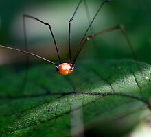 Along Came A Spider by SueGPhotography
