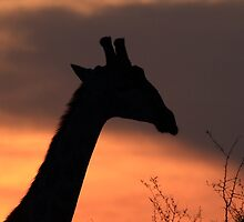 Sunset silhouette of a member of the journey by John Banks