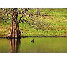 Duck on the Lake Photographic Print