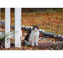 Cat at the Gate Photographic Print