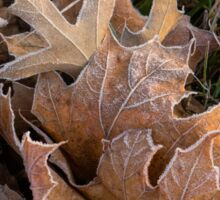 Frosty Leaves  Sticker