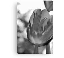 Below the Tulip Canvas Print