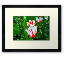 White and Red Wonders Framed Print