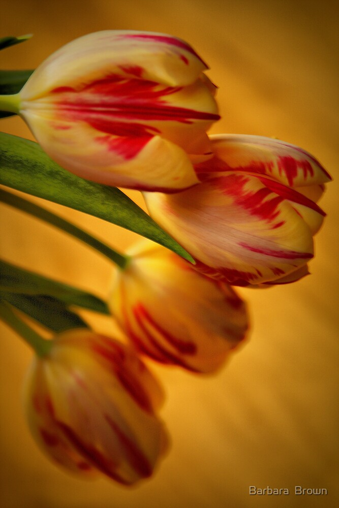 Tulip Lights by Barbara  Brown