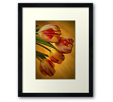 Tulip Lights Framed Print