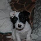 taffy at 5 wks old  by David Ford Honeybeez photo