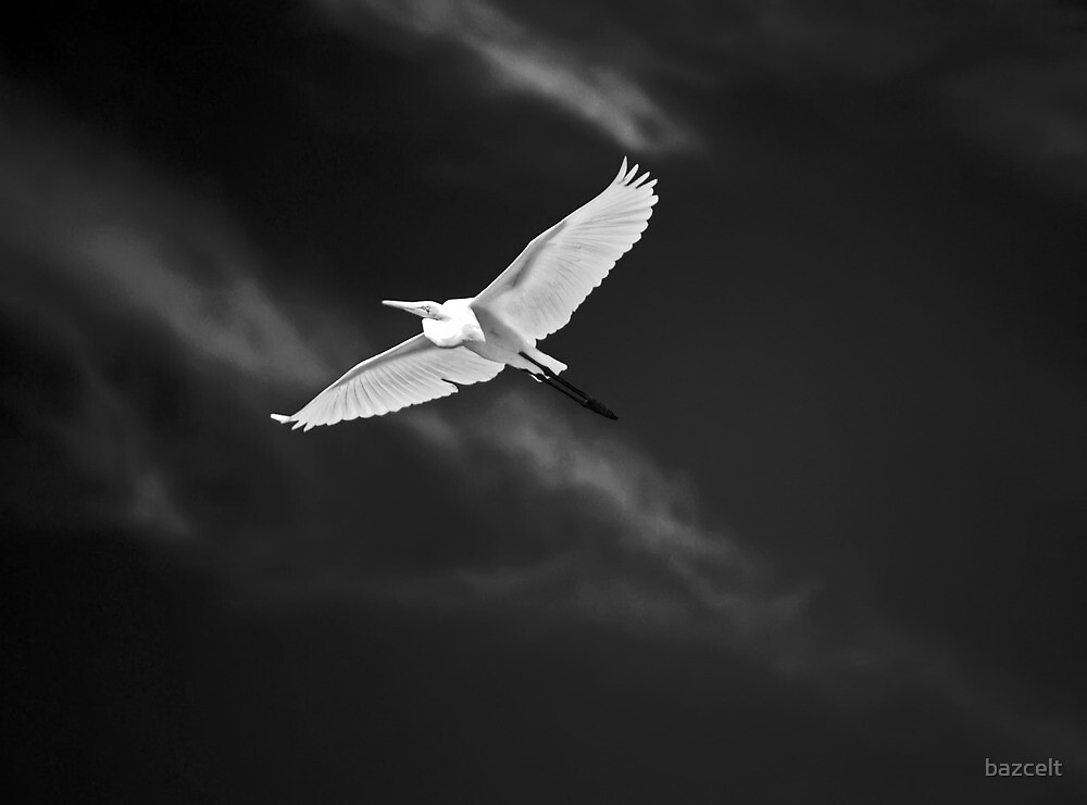 White Flight by bazcelt