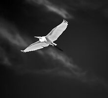 White Flight by bazcelt