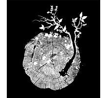 Nature's Choir (mono) Photographic Print