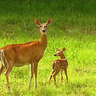 Mom and Baby  by lorilee