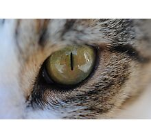 Cats Eye Macro Photographic Print