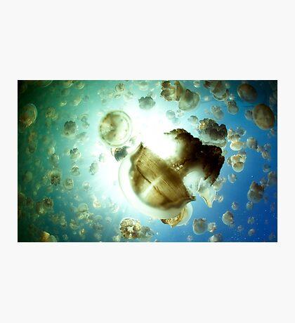 Jellyfish Army Photographic Print