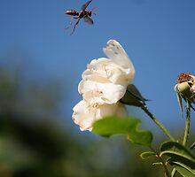 Wasp in mid fligh by boblemur