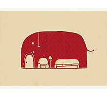 Elephant in the Room Photographic Print
