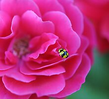 Yellow and Black lady beetle on pink flower by boblemur