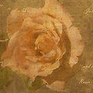Textures Rose by julie anne  grattan