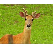 Mister Buck Photographic Print
