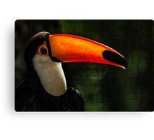 Toucan No. 6 of Iguazu Canvas Print