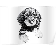 Wire-haired dachshund Poster