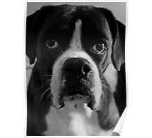 Arwen's Portrait in Black and White  -Boxer Dogs Series- Poster