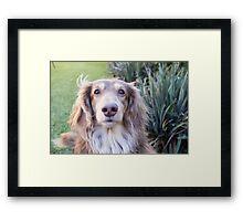 Teddie Boy Framed Print