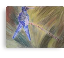 Hummingbird - pastel on paper Canvas Print