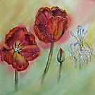 Transitions - Tulips by bevmorgan