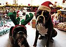 Merry Christmas!  -Boxer Dogs Series- by Evita