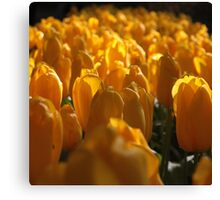 The land of tulips Canvas Print