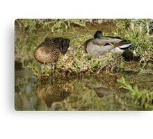 Sleeping Ducks Canvas Print